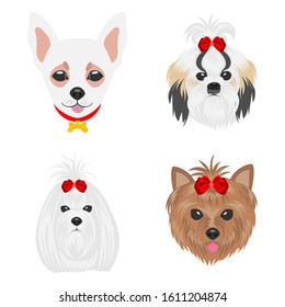 Faces of dogs of different breeds. Dogs drawn in pop art style. Set of flat vector illustrations on a white background. Chihuahua, Shih Tzu, Maltese, Yorkshire Terrier.