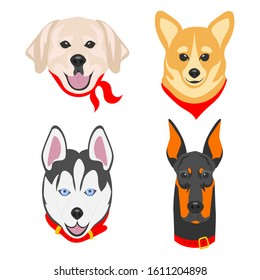 Faces of dogs of different breeds. Dogs drawn in pop art style. Set of flat vector illustrations on a white background. Labrador, Corgi, Husky, Doberman.