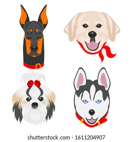 Faces of dogs of different breeds. Dogs drawn in pop art style. Set of flat vector illustrations on a white background. Doberman, Labrador, Shih Tzu, Husky.