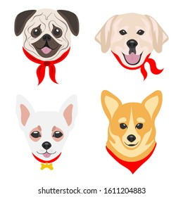 Faces of dogs of different parodies. Dogs drawn in pop art style. Set of flat vector illustrations on a white background. Pug, Labrador, Chihuahua, Corgi.