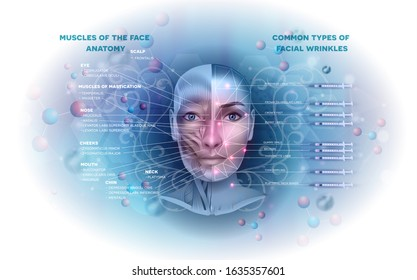 Facial muscles anatomy info and common types of facial wrinkles treatment areas on a beautiful light blue abstract background