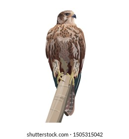Falcon sitting on a tree branch. Realistic image. Vector illustration isolated on the white background.