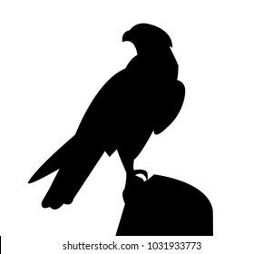 Falcon standing on a rock silhouette