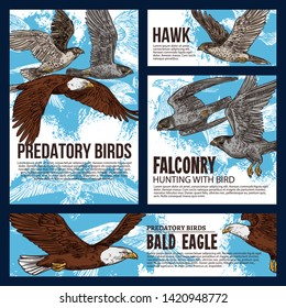 Falconry hunting sport, wild predatory birds hunt sketch posters. Vector eagles, falcons and predatory vultures on sky hunt, bird of prey hawk and bald eagle in traditional falconry hunting