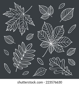 Fall of the leaves. Autumn leaves are drawn with chalk on black chalkboard. Sketch, design elements. Vector illustration.