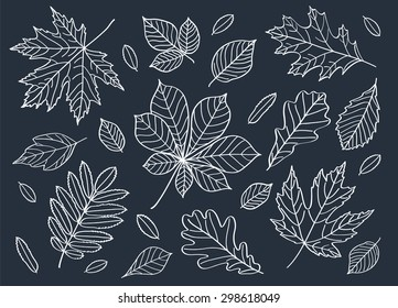 Fall of the leaves. A big set of autumn leaves of different tree species. Autumn leaves are drawn with chalk on the black chalkboard. Sketch, design elements. Vector illustration.