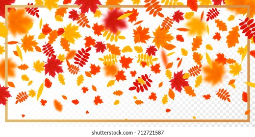 Falling autumn leaves with frame pattern on transparent background. Vector Illustration for the Autumn Theme.