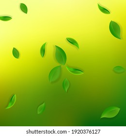 Falling green leaves. Fresh tea neat leaves flying. Spring foliage dancing on yellow green background. Actual summer overlay template. Interesting spring sale vector illustration.