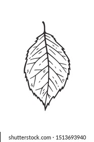 Falling leaf vector illustration. Decorative graphic black outline autumn leaf collection isolated on white background. Hand drawn organic lines