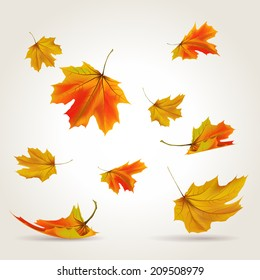 Falling leaves set, vector illustration