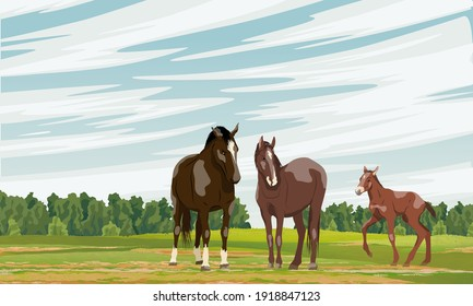 A family of horses stands in the field. Red foal Equus ferus caballus. Wild and farm horses. Realistic vector landscape