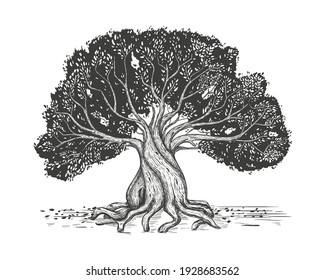 Family tree hand drawn sketch print. Genealogical tree. Family tree in vintage sketch style. Pedigree template design, vector illustration. Stylized old olive tree.