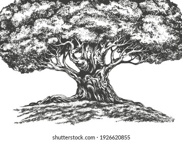 family tree hand drawn vector illustration realistic sketch