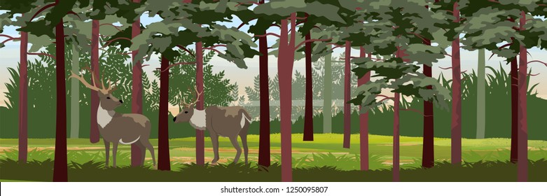 Family Wild reindeer in the pine forest. Animals of Russia, Canada, USA, Scandinavia and Iceland. Landscape north in summer. Realistic Vector Landscape
