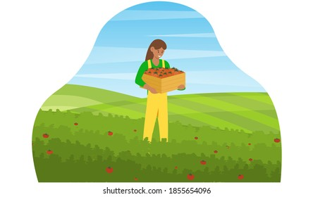 Farm and agriculture. Young woman collecting organic tomatoes from green field. Girl holding wooden box full of fresh vegetables. Girl farmer character. Cartoon flat vector illustration