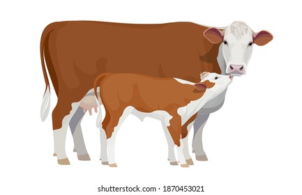 Farm animal - Cow with Calf. Hereford - The Best Beef Cattle Breeds. Vector Illustration.