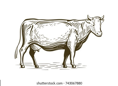 Farm animal, cow standing, sketch. Dairy farm, vintage vector illustration