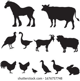 Farm Animal lifestock black , cattle and poultry - Vector