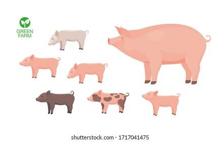 Farm Animal Pig with Funny Piggy. Little Piglet. Vector Set.
