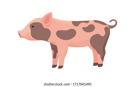 Farm Animal Pig. Funny Piggy. Little Dirty Piglet.