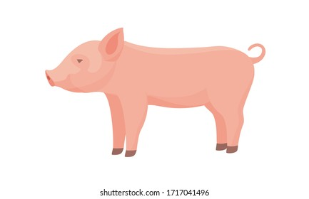 Farm Animal Pig. Funny Piggy. Little Piglet.