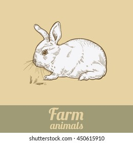 Farm animal rabbit. Bunny colored print. Style vintage engraving. Vector illustration of series - farm animals isolated. Template for packaging design farm products, signage natural food stores.
