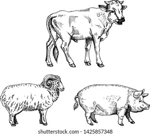 Farm animal set. Fresh organic meat. Bull, sheep, pig. Hand drawn sketch. Vintage vector engraving illustration for poster, web. Isolated on white background
