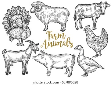 Farm animal set. Fresh organic meat. Cow, goat, pig, turkey, hen, sheep, goose, duck. Hand drawn sketch. Vintage vector engraving illustration for poster, web. Isolated on white background