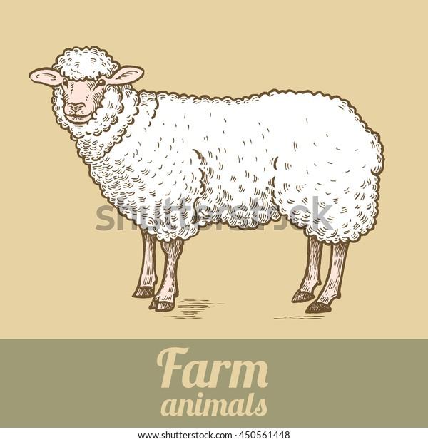 Farm Animal Sheep Colored Print Style Stock Vector (Royalty