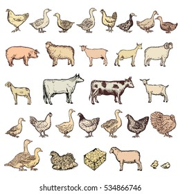 Farm Animals Big Collection Vector Hand Drawn Set