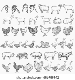 Farm animals collection vector hand drawn set