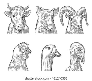 Farm animals icon set. Heads pig, cow, chicken, goose, turkey and goat isolated on white background. Vector black vintage engraving illustration for menu, web and label. Hand drawn in a graphic style.