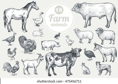Farm Animals Isolated On White Background Vintage Vector Set