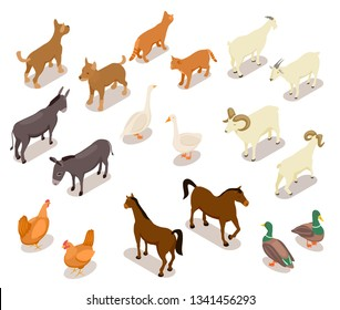Farm animals isometric. Horse and dog, cat and goose, chicken and goat, ram and duck, donkey. Domestic animals vector 3d set isolated