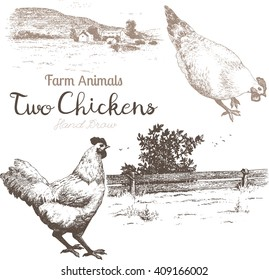 Farm animals set 2. Vector sketches of 2 chicken and countryside on white background