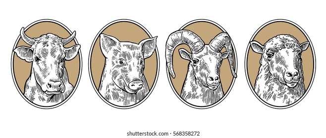 Farm animals set. Pig, cow, sheep and goat heads isolated on brown background. Vector black vintage engraving illustration for menu, web and label. Hand drawn in a graphic style.