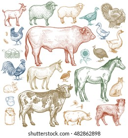 Farm animals set. Vector.