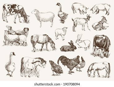 Domestic Animals Images, Stock Photos & Vectors | Shutterstock