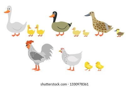 Farm birds: duck, goose, chicken, rooster isolated on white background. Farm birds and chicks