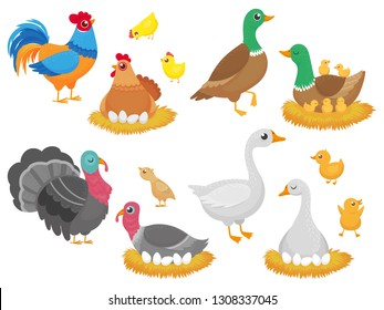 Farm birds. Poultry chicken, goose duck bird and turkey family nest. Birds nests with eggs, pets or zoo animals. Easter character isolated cartoon vector icons set