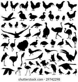 farm birds silhouettes big vector collection