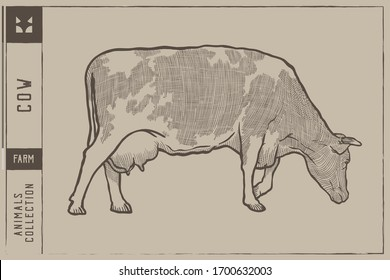 Farm cow Vector illustration - Hand drawn - Out line