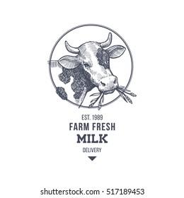Farm cow vintage logo. Cow illustration design template. Vector illustration