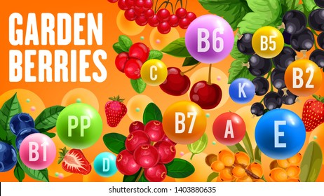 Farm garden berry harvest of cherry, black currant or redcurrant and strawberry. Vector vitamins and minerals in organic blueberry, sea buckthorn or rowanberry and forest cranberry berries