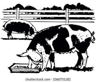 Farm Hogs - Retro Clip Art Illustration