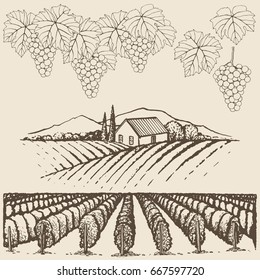 Farm landscape with vineyard and grapes, hand drawn set,