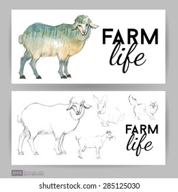 Farm life. Flyer design with sheep