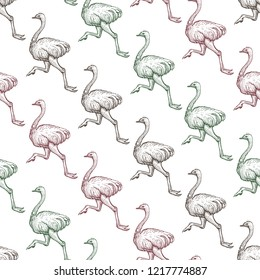 Farm ostrich gradient seamless pattern. Running emu bird hand drawn background. African feathered ostrich realistic texture. Wild animal drawing. Wallpaper design. Isolated vector illustration