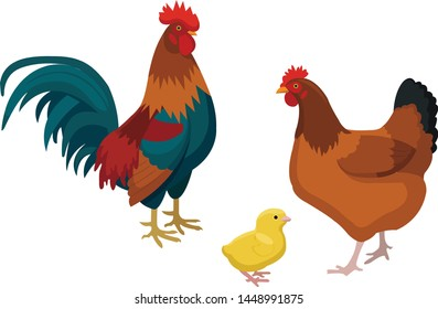 farm pets - chicken, rooster and little yellow chicken