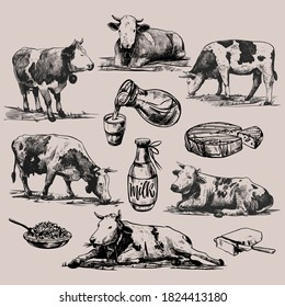Farm products and alpine cows big set hand drawn in a graphic style. Vintage vector engraving illustration for poster, web, packaging, branding, flyer, print. Isolated on gray background